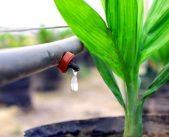 5 phương pháp tưới nước cho cây hiệu quả